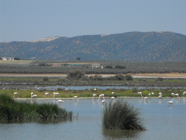 Wilde Flamingos in natürliche Umgebung